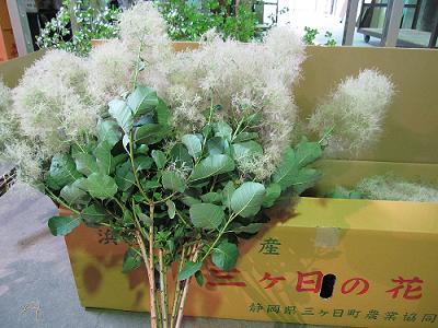 静岡 JA三ヶ日町 『スモークツリー』